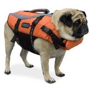 guide om redningsvest til hunde